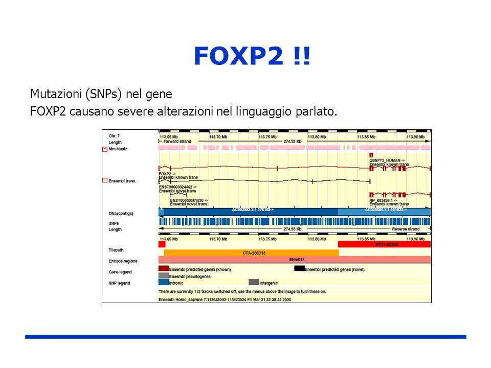 FOXP2 !! Mutazioni (SNPs) nel gene