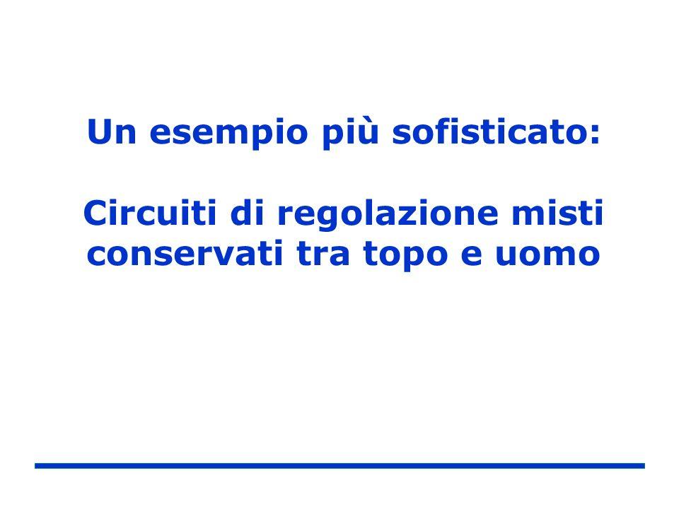 Un esempio più sofisticato: Circuiti di regolazione misti conservati tra topo e uomo