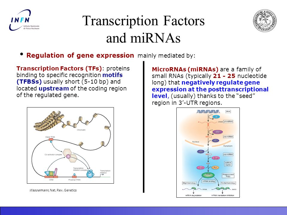 Transcription Factors and miRNAs