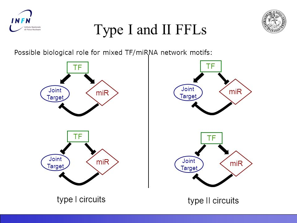 Type I and II FFLs type I circuits type II circuits TF TF miR miR TF