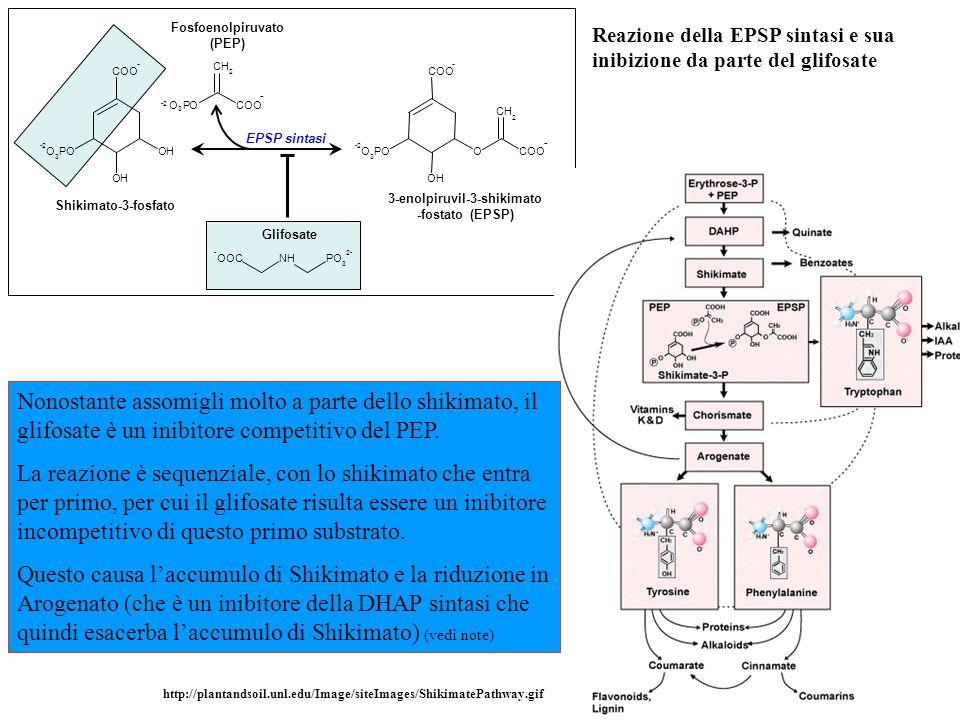 Fosfoenolpiruvato (PEP) 3-enolpiruvil-3-shikimato -fostato (EPSP)