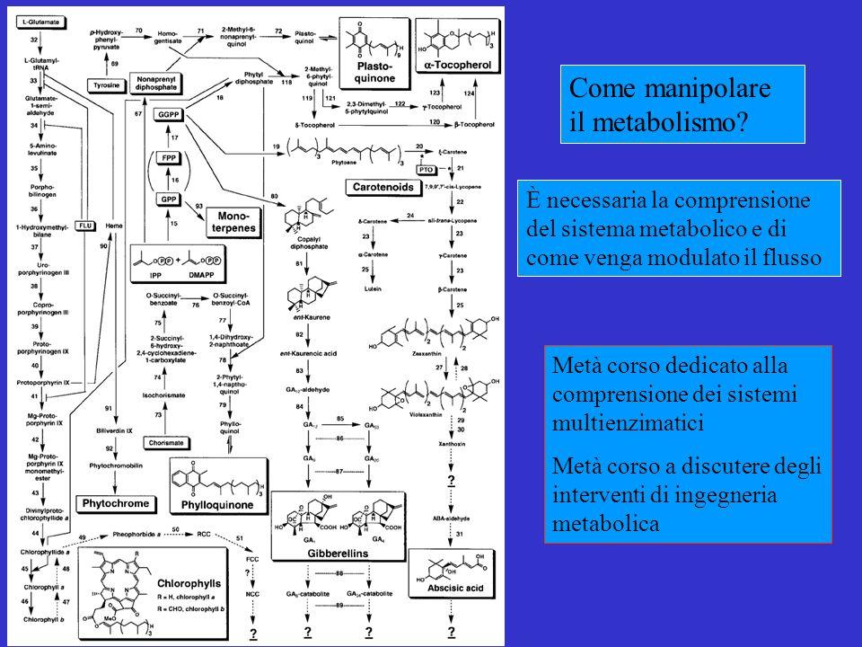 Come manipolare il metabolismo