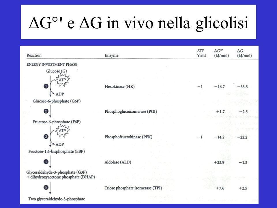 ΔG° e ΔG in vivo nella glicolisi