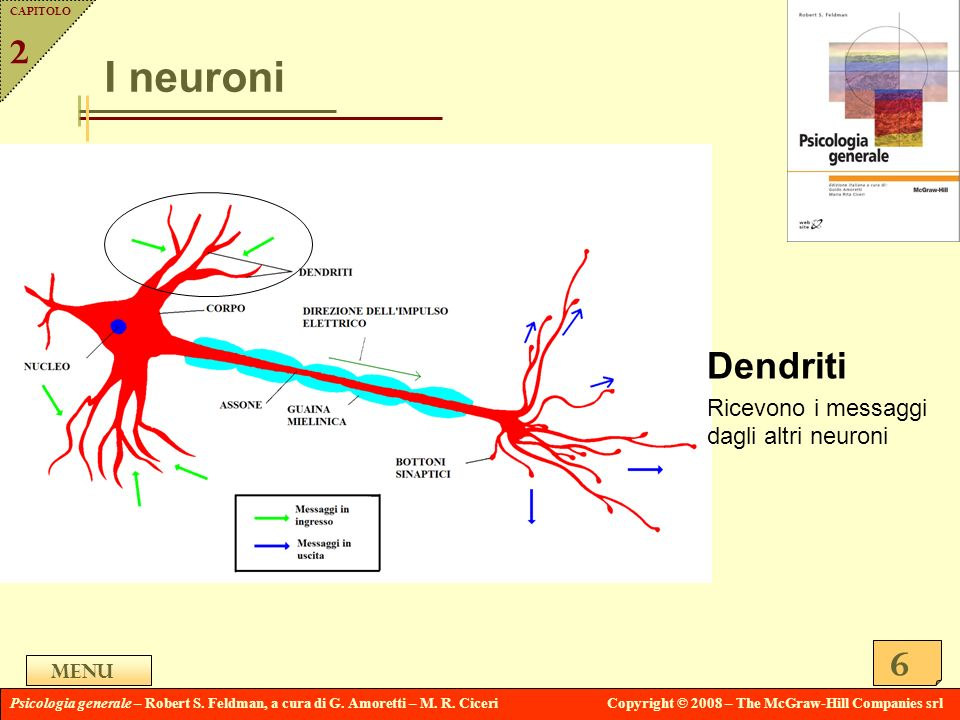I neuroni Dendriti 2 Ricevono i messaggi dagli altri neuroni Menu