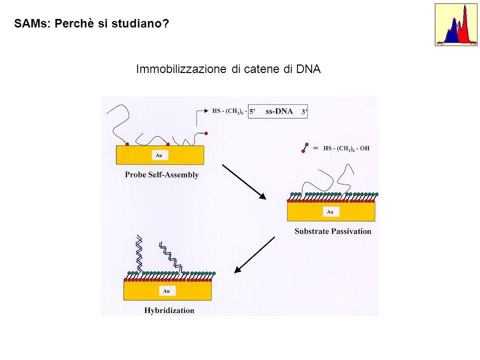Immobilizzazione di catene di DNA