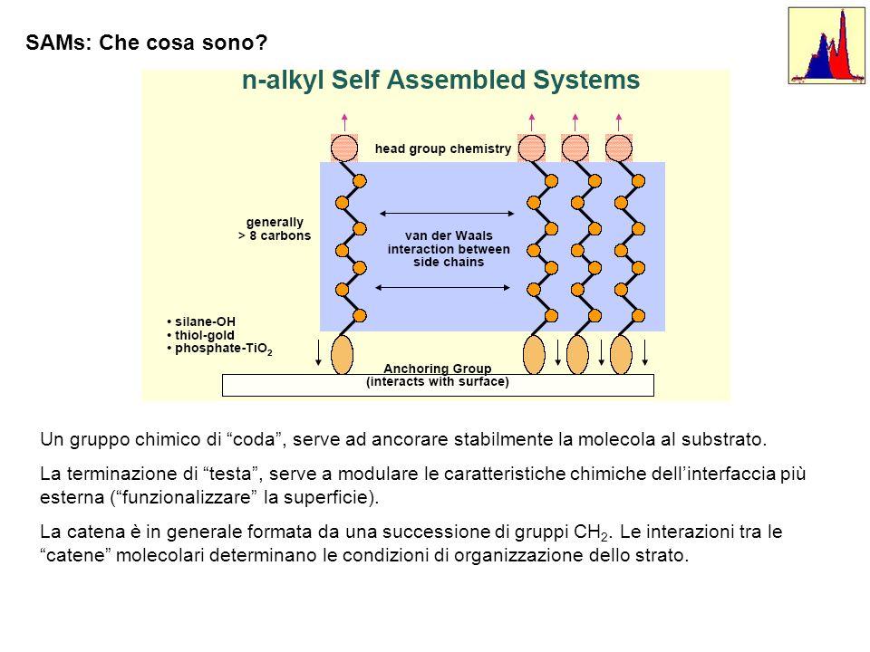 SAMs: Che cosa sono Un gruppo chimico di coda , serve ad ancorare stabilmente la molecola al substrato.