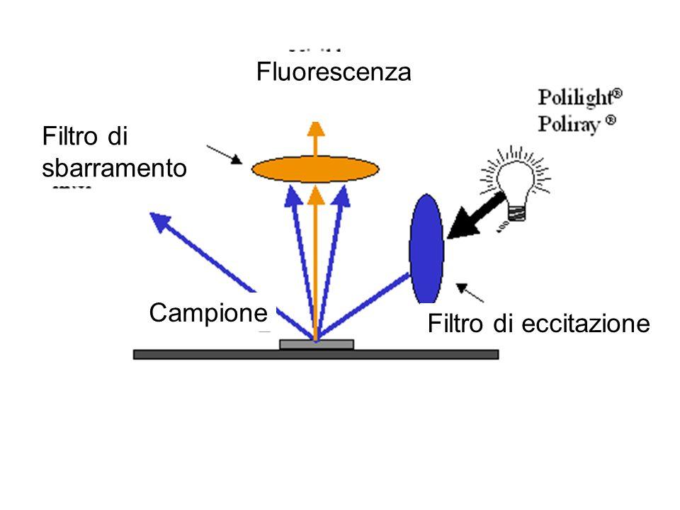 Fluorescenza Filtro di sbarramento Campione Filtro di eccitazione