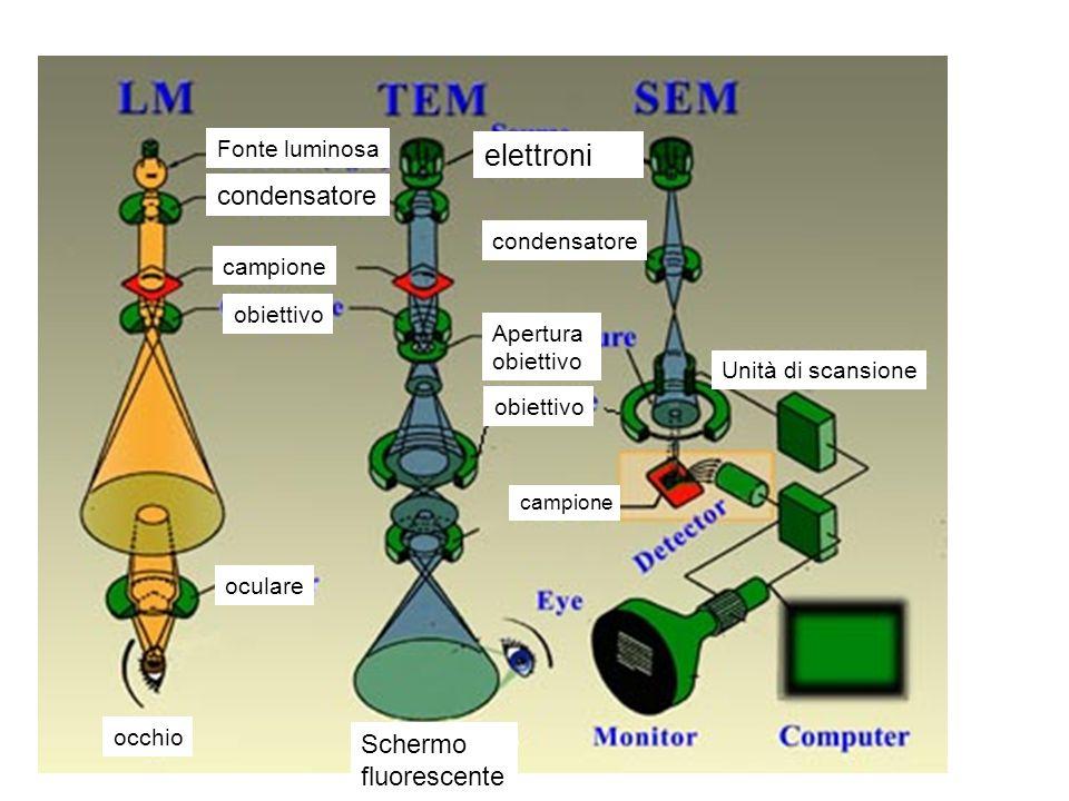 elettroni condensatore Schermo fluorescente Fonte luminosa