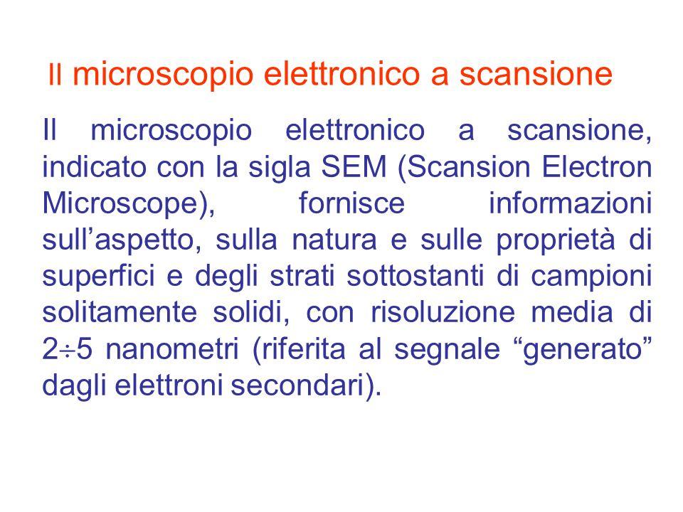 Il microscopio elettronico a scansione