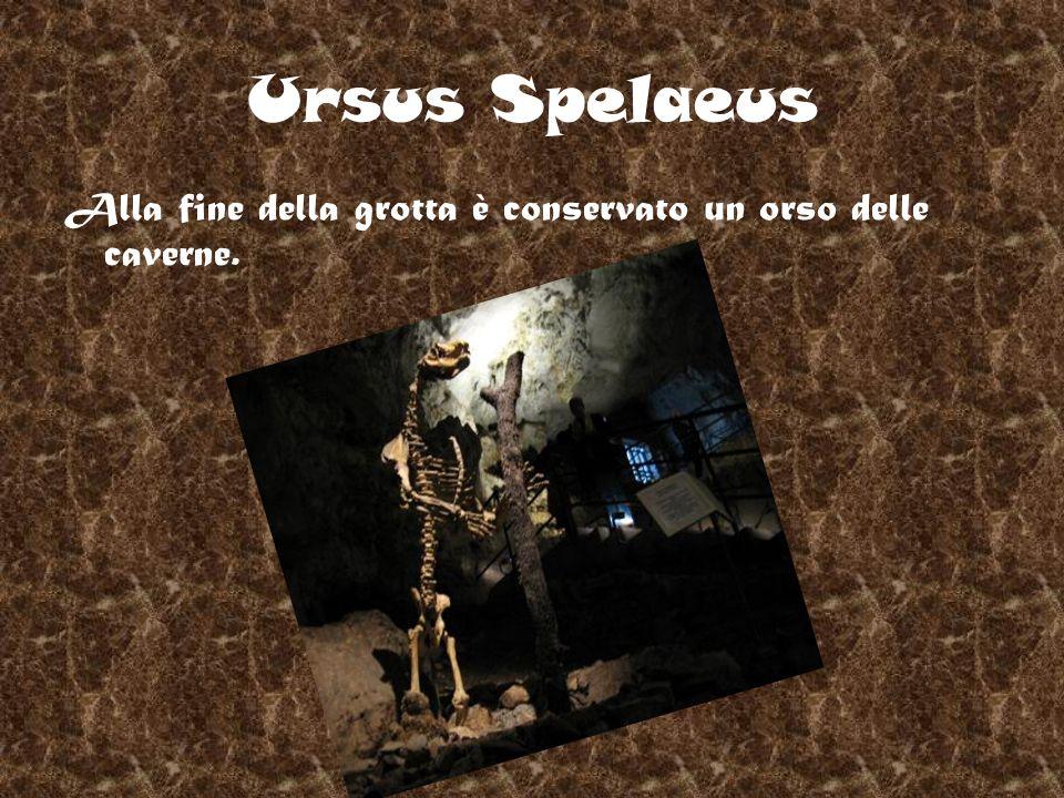 Ursus Spelaeus Alla fine della grotta è conservato un orso delle caverne.