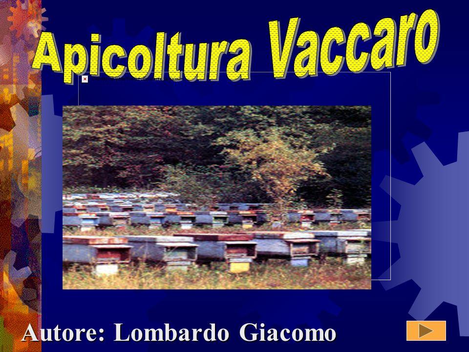 Autore: Lombardo Giacomo