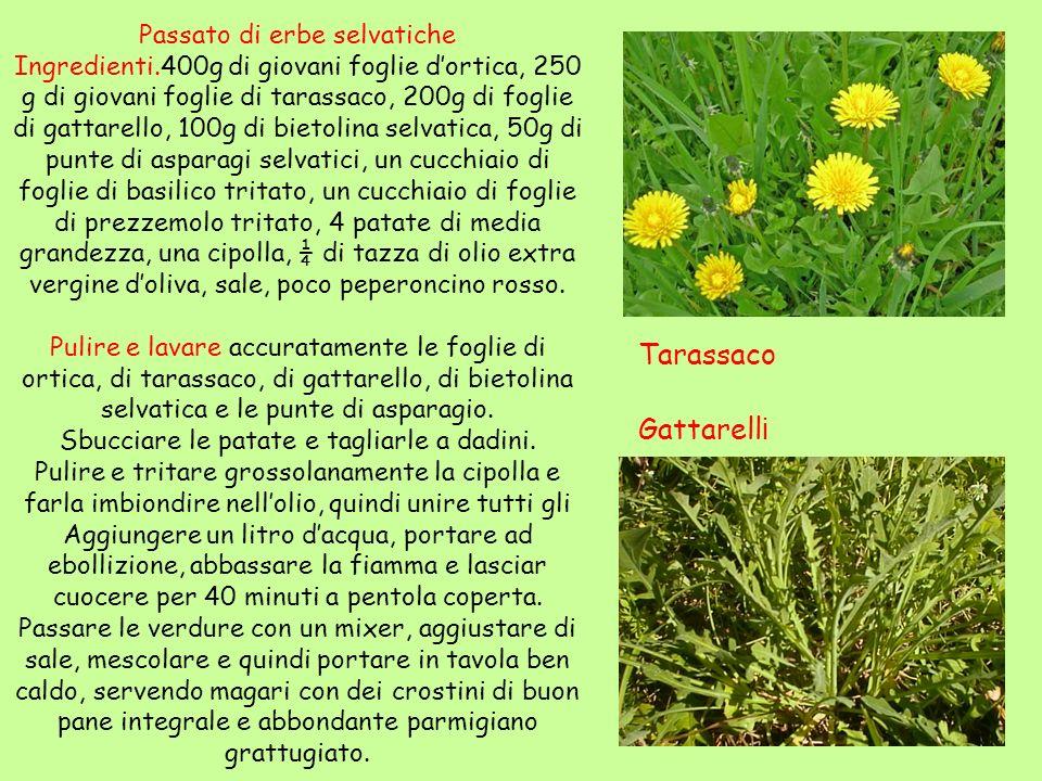 Tarassaco Gattarelli Passato di erbe selvatiche
