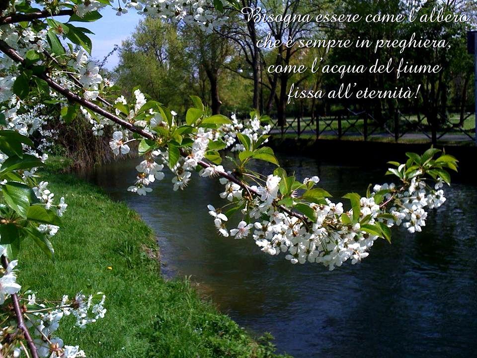 Bisogna essere come l'albero che è sempre in preghiera, come l'acqua del fiume fissa all'eternità!