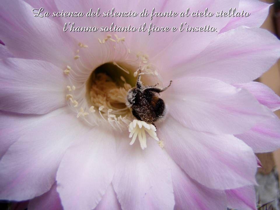 La scienza del silenzio di fronte al cielo stellato l'hanno soltanto il fiore e l'insetto.