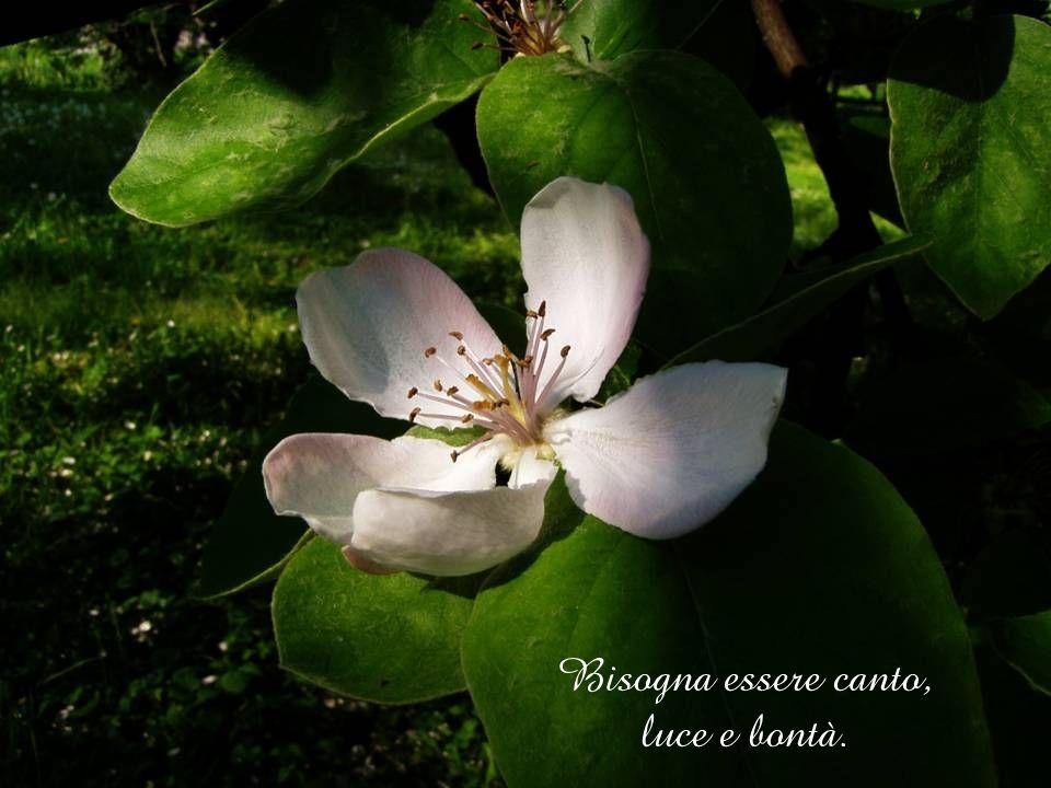 Bisogna essere canto, luce e bontà.