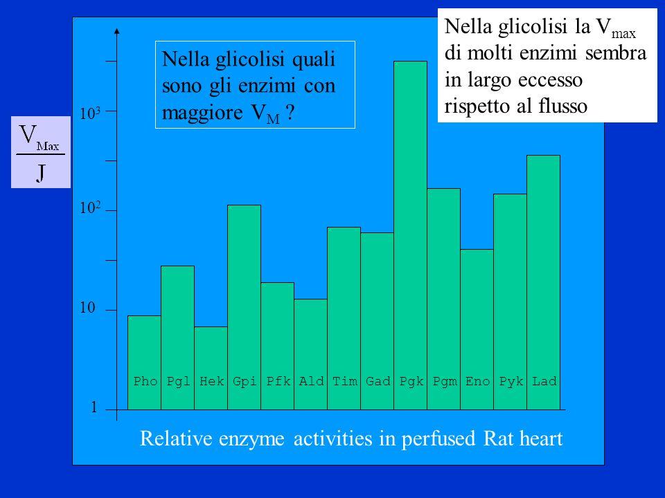 Nella glicolisi quali sono gli enzimi con maggiore VM