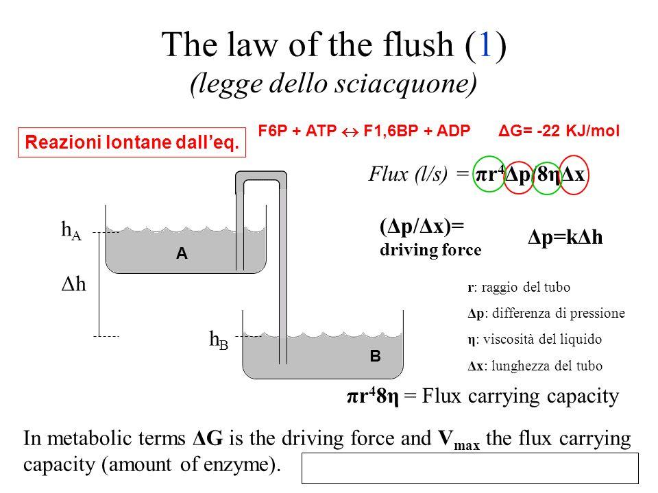 The law of the flush (1) (legge dello sciacquone)