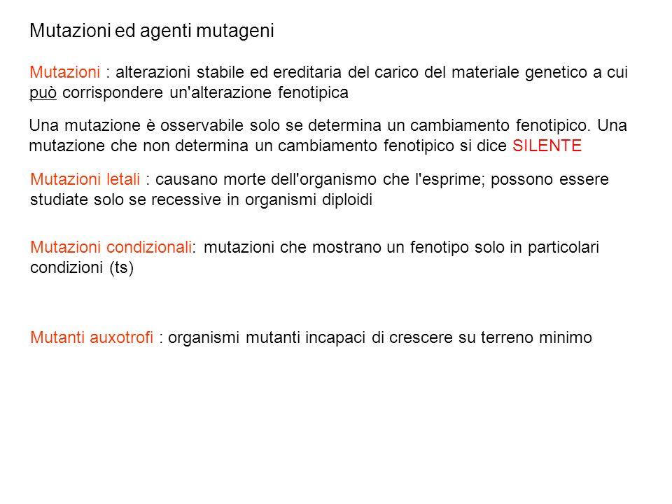 Mutazioni ed agenti mutageni
