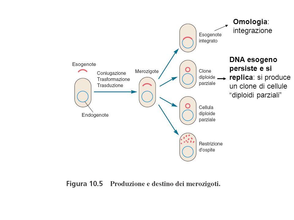 Omologia: integrazione