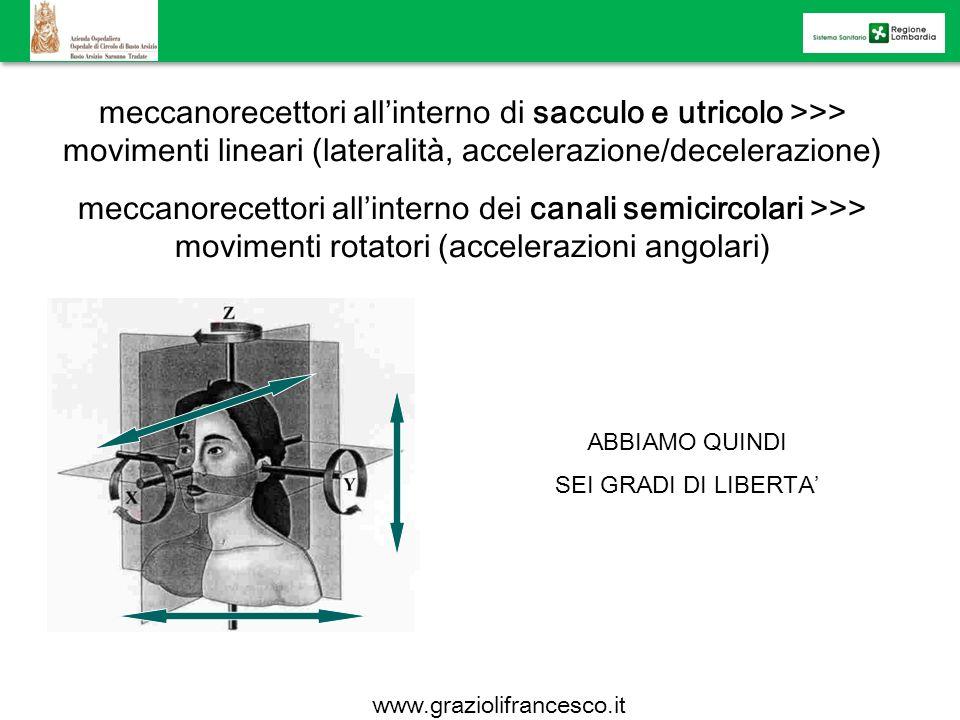 meccanorecettori all'interno di sacculo e utricolo >>> movimenti lineari (lateralità, accelerazione/decelerazione)