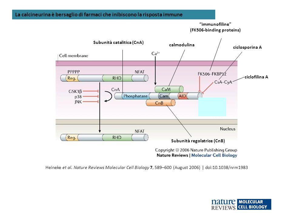 (FK506-binding proteins)