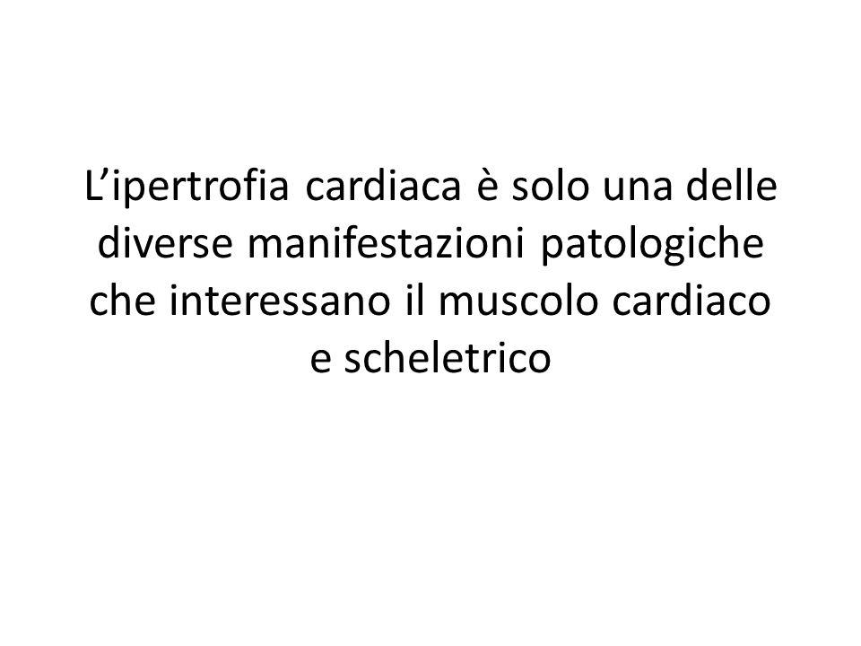 L'ipertrofia cardiaca è solo una delle diverse manifestazioni patologiche che interessano il muscolo cardiaco e scheletrico