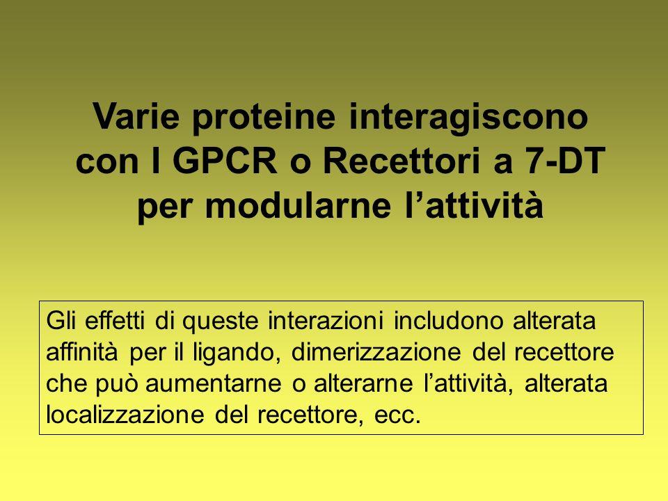 Varie proteine interagiscono con I GPCR o Recettori a 7-DT per modularne l'attività