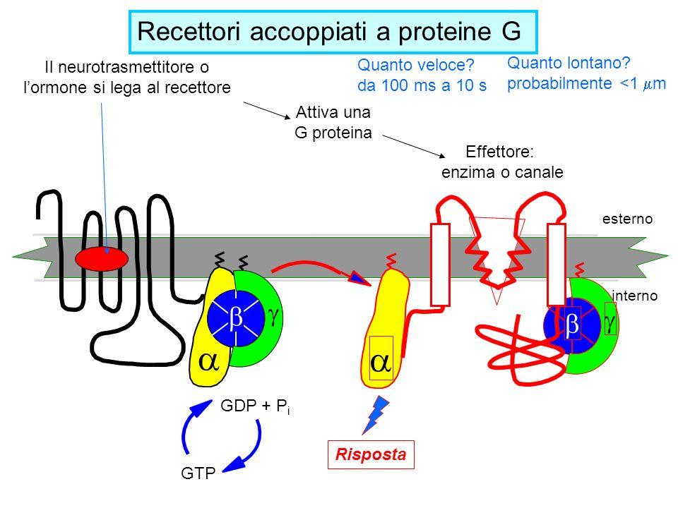 Il neurotrasmettitore o l'ormone si lega al recettore