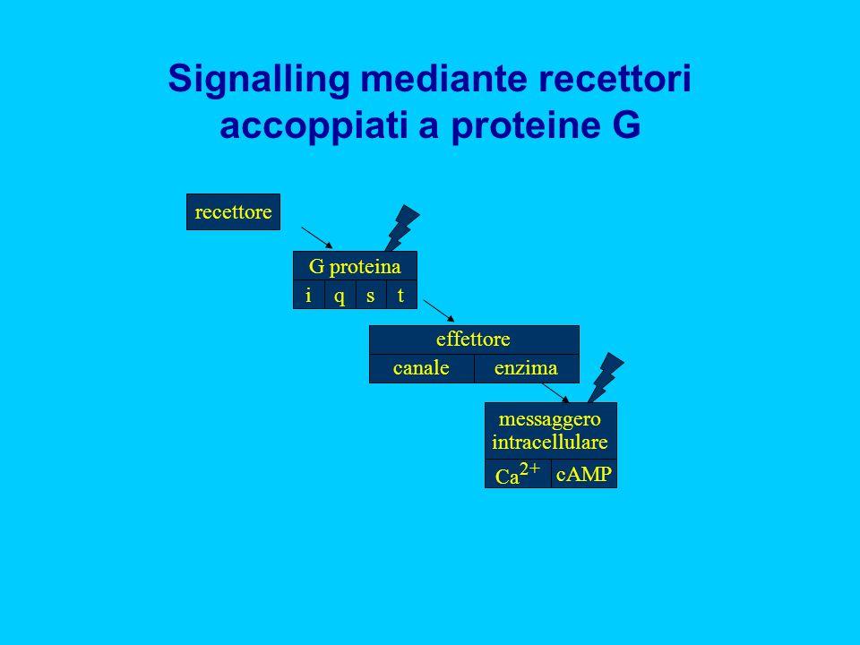 Signalling mediante recettori accoppiati a proteine G