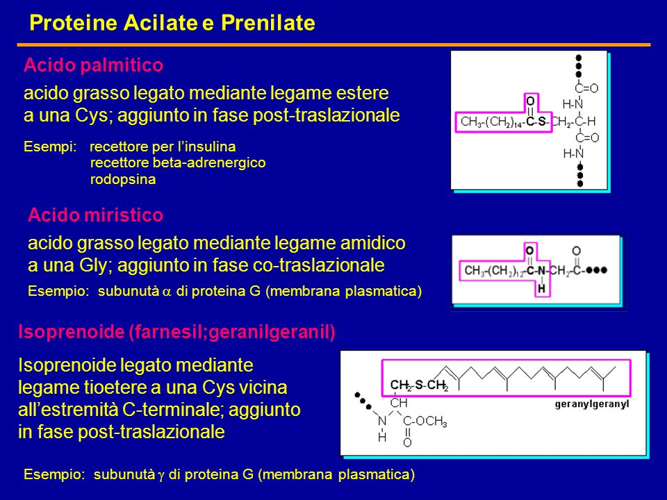 Proteine Acilate e Prenilate