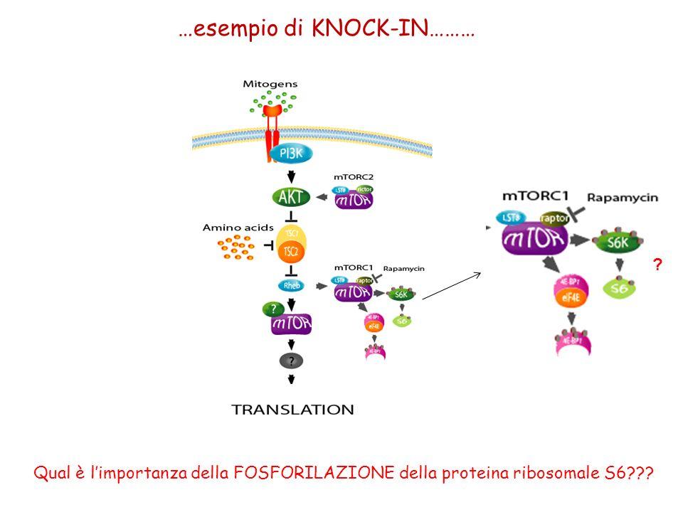 …esempio di KNOCK-IN………