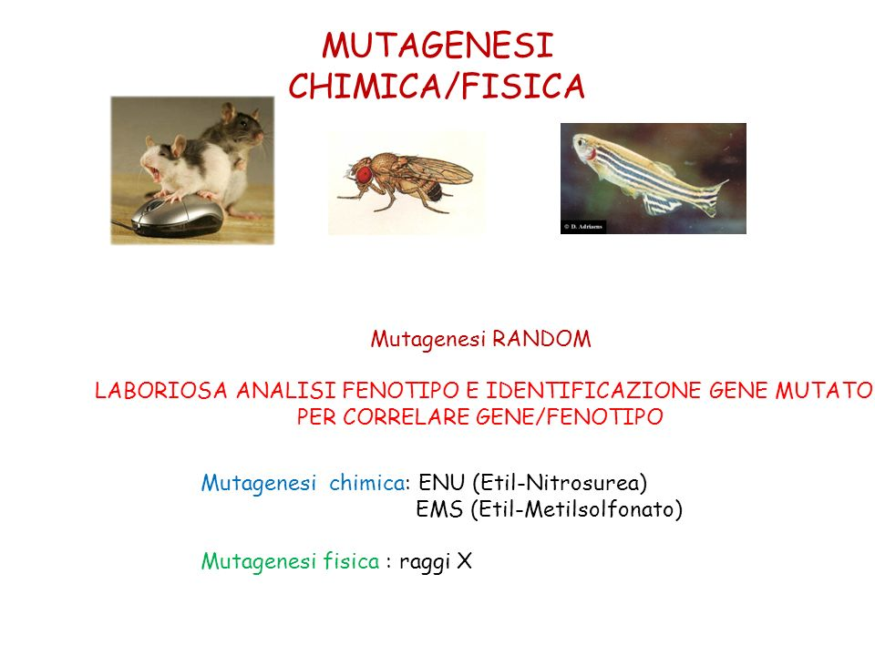 MUTAGENESI CHIMICA/FISICA