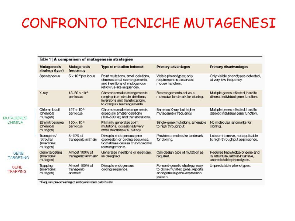 CONFRONTO TECNICHE MUTAGENESI