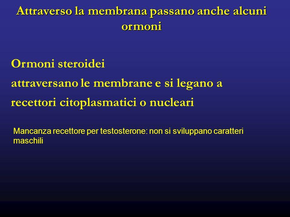 Attraverso la membrana passano anche alcuni ormoni