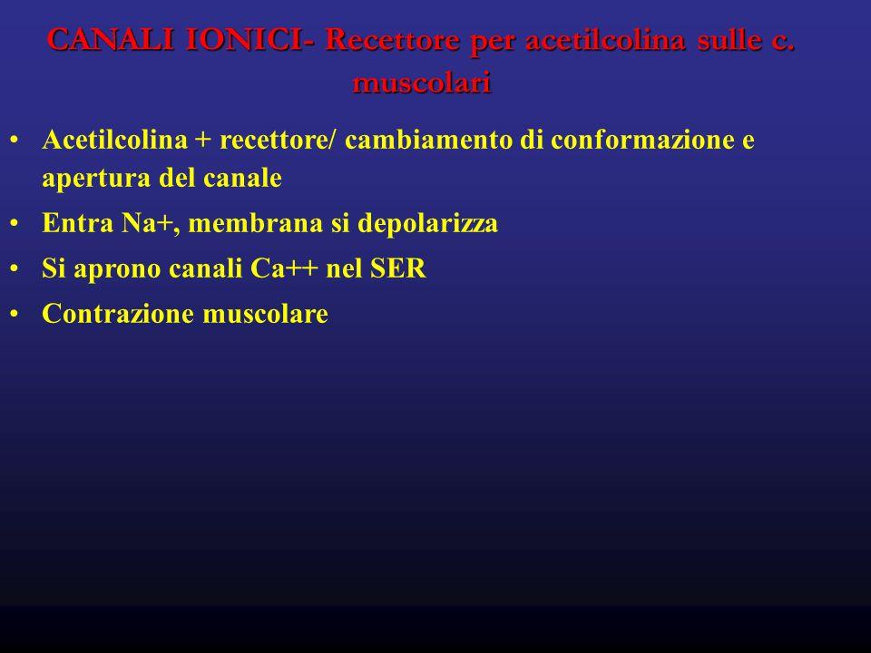 CANALI IONICI- Recettore per acetilcolina sulle c. muscolari