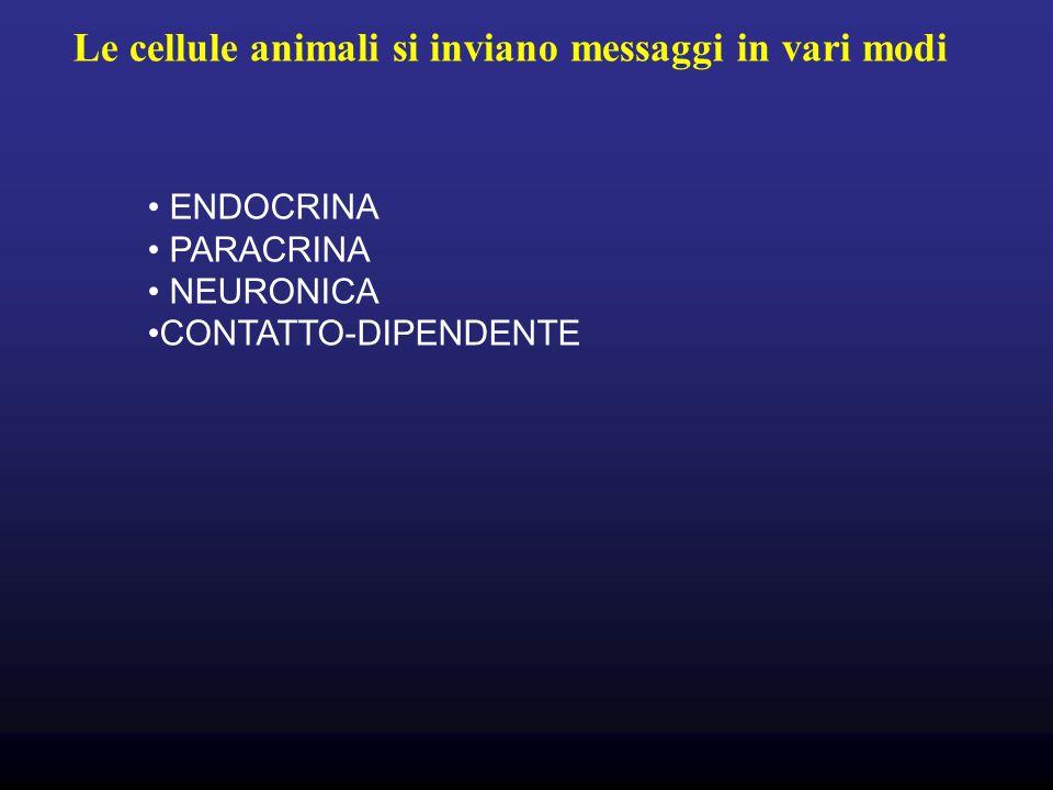 Le cellule animali si inviano messaggi in vari modi