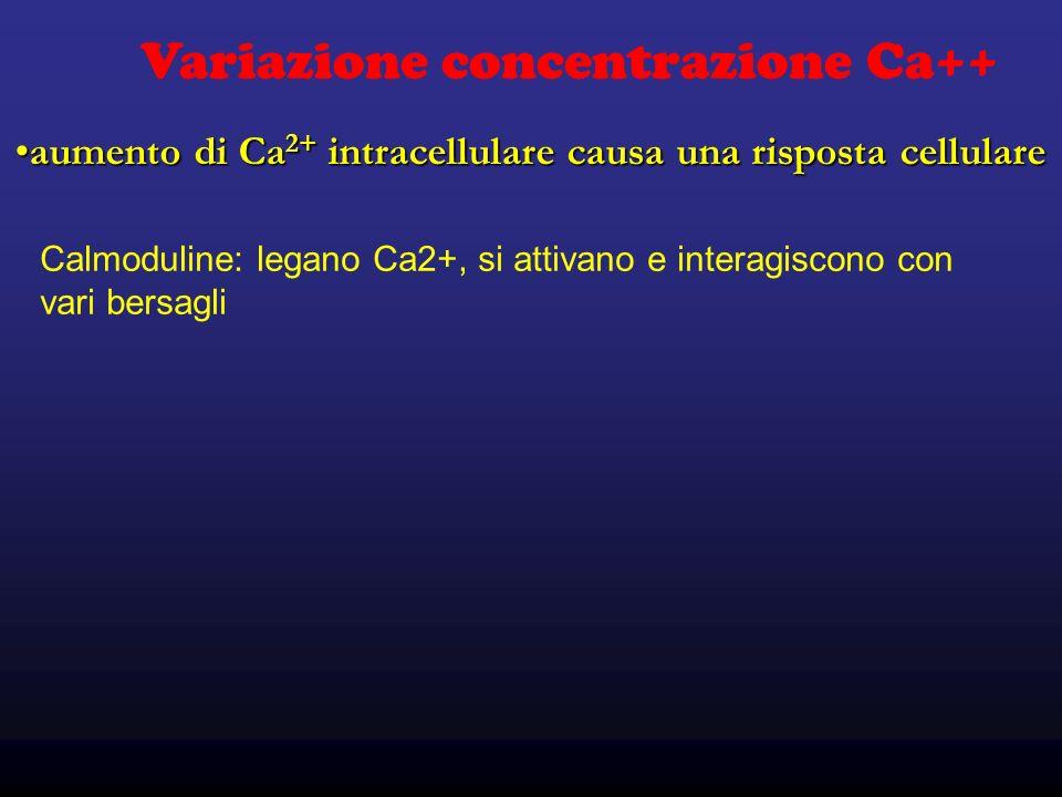 Variazione concentrazione Ca++