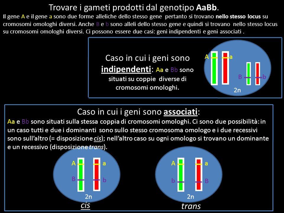 Caso in cui i geni sono associati: