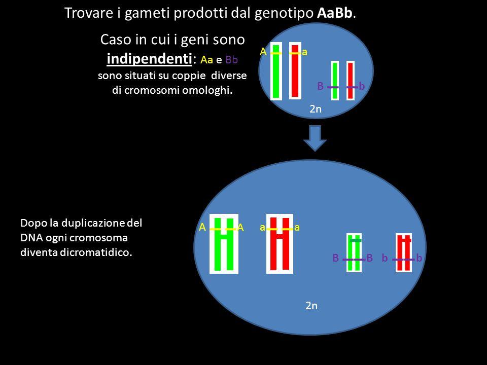 Trovare i gameti prodotti dal genotipo AaBb.
