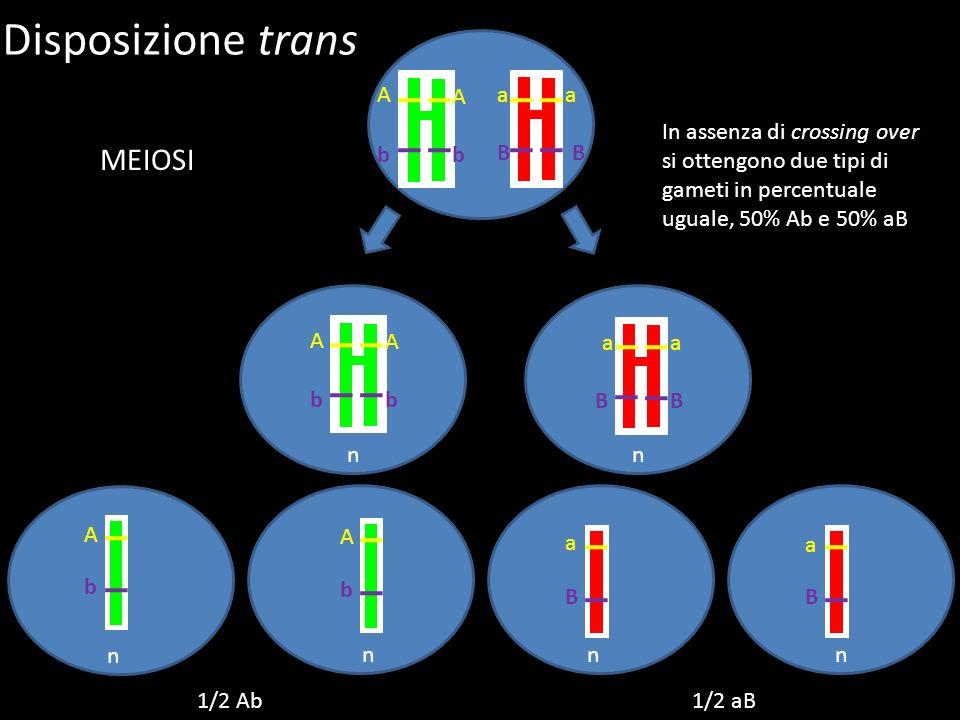 Disposizione trans MEIOSI A A a a