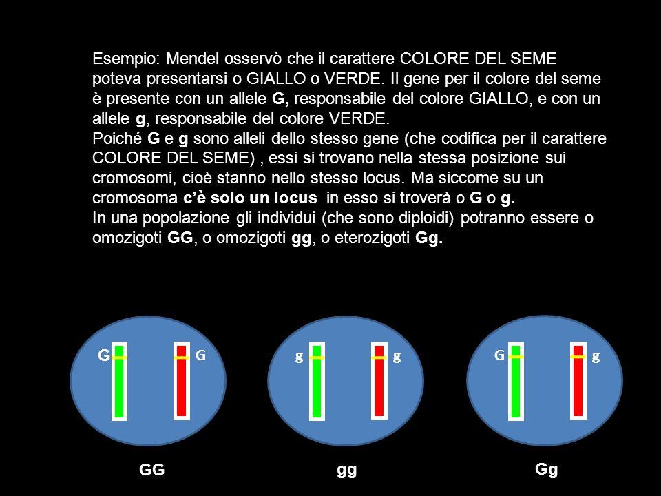 Esempio: Mendel osservò che il carattere COLORE DEL SEME poteva presentarsi o GIALLO o VERDE. Il gene per il colore del seme è presente con un allele G, responsabile del colore GIALLO, e con un allele g, responsabile del colore VERDE.
