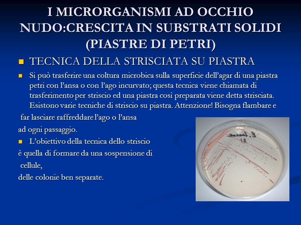 I MICRORGANISMI AD OCCHIO NUDO:CRESCITA IN SUBSTRATI SOLIDI (PIASTRE DI PETRI)