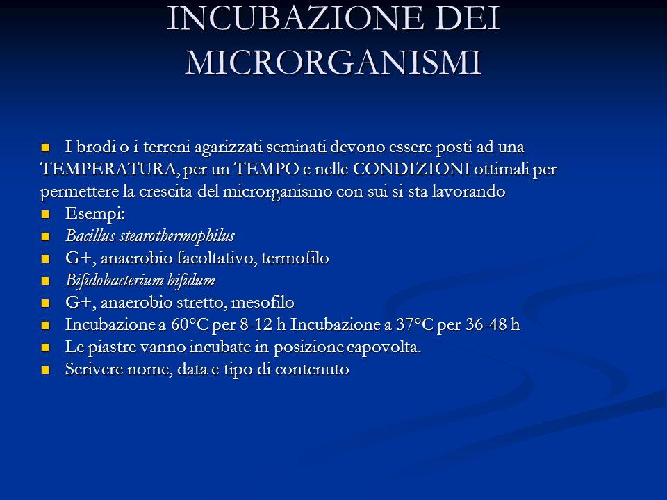 INCUBAZIONE DEI MICRORGANISMI