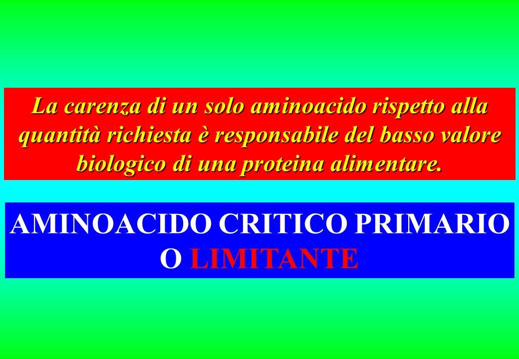 AMINOACIDO CRITICO PRIMARIO