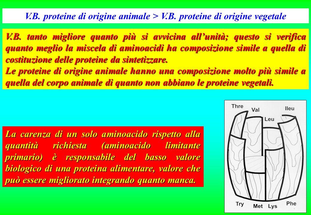 V. B. proteine di origine animale > V. B