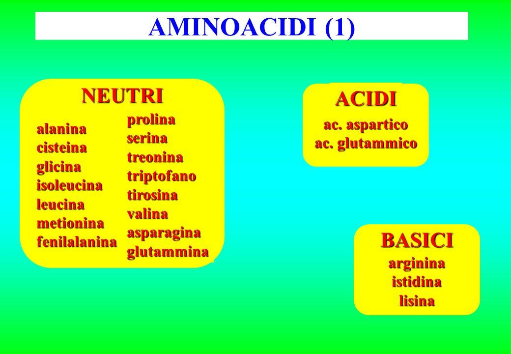 AMINOACIDI (1) NEUTRI ACIDI BASICI prolina serina treonina triptofano