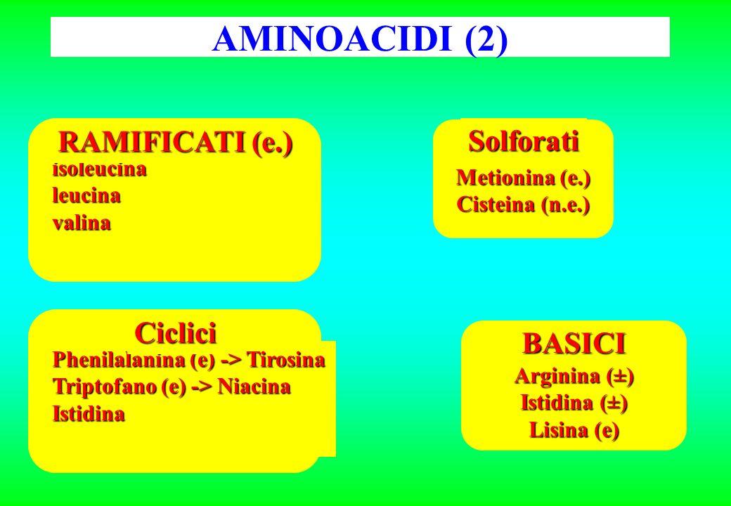 AMINOACIDI (2) RAMIFICATI (e.) Solforati Ciclici BASICI isoleucina