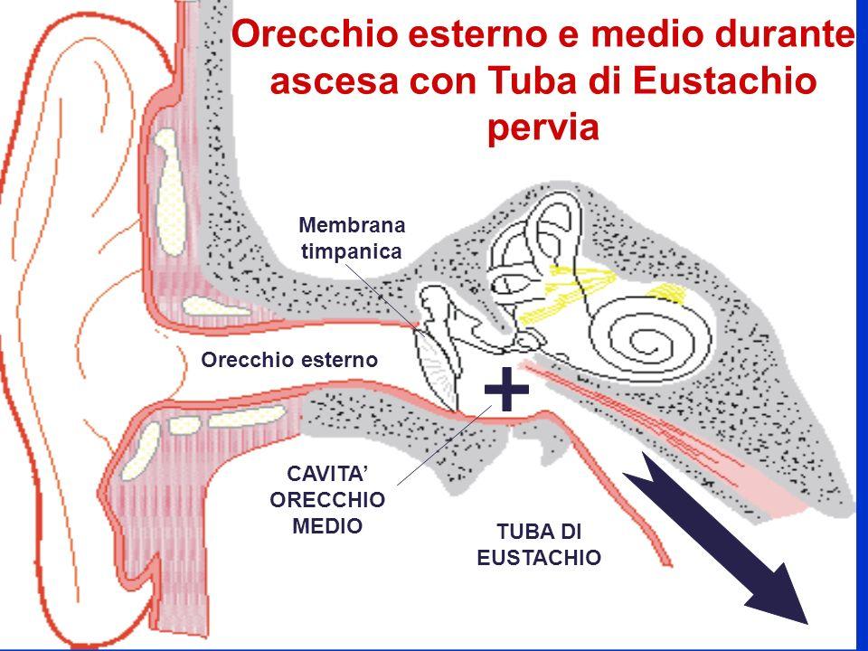 Orecchio esterno e medio durante ascesa con Tuba di Eustachio