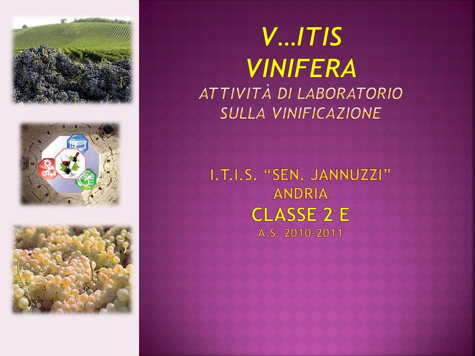 V…ITIS VINIFERA attività di laboratorio sulla vinificazione i. t. i. s