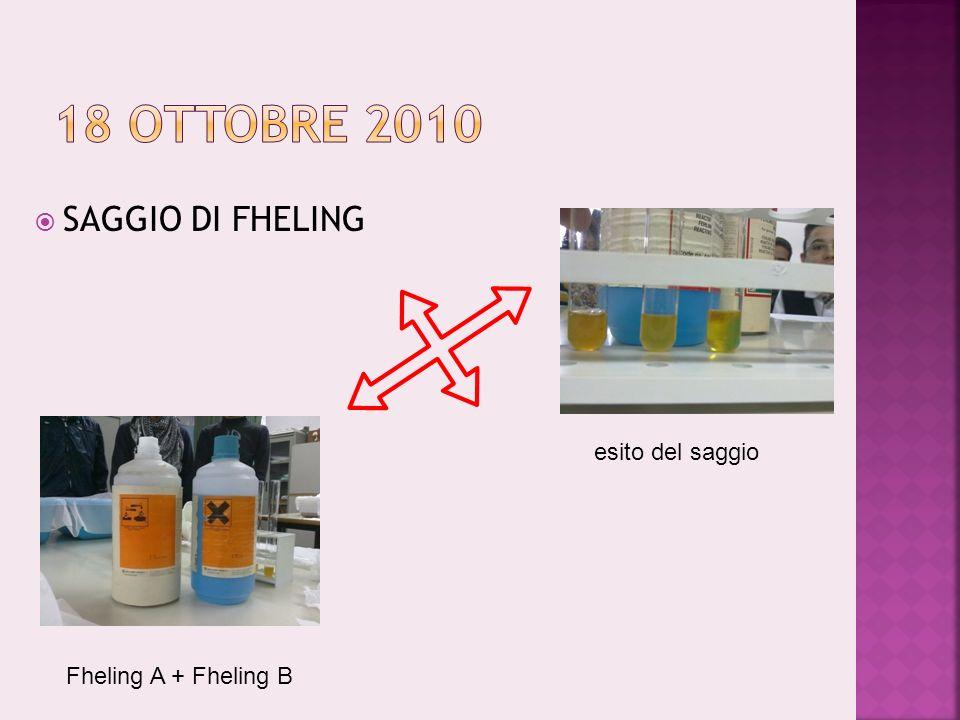 18 ottobre 2010 SAGGIO DI FHELING esito del saggio